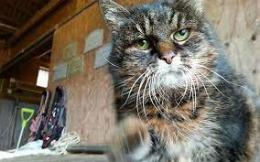 Cea mai bătrână pisică din lume a ajuns la vârsta de 30 de ani