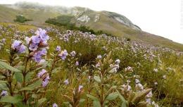 Plante care înfloresc rar: Curiozităţi ale naturii care oferă o experienţă unică norocoşilor