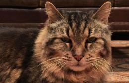 Ea este cea mai bătrână pisică din lume. Câţi ani are